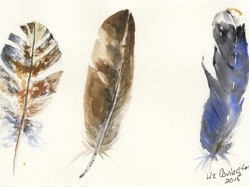 Adorn Your Walls with Beautiful Animal Watercolors from Covington