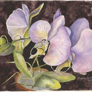 "Orchids 11"" x 15"""
